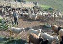 Мигранты из Северного Кавказа вытесняют коренное население Ставрополья